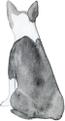 Boston terrier grey