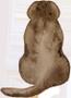 Brown dog